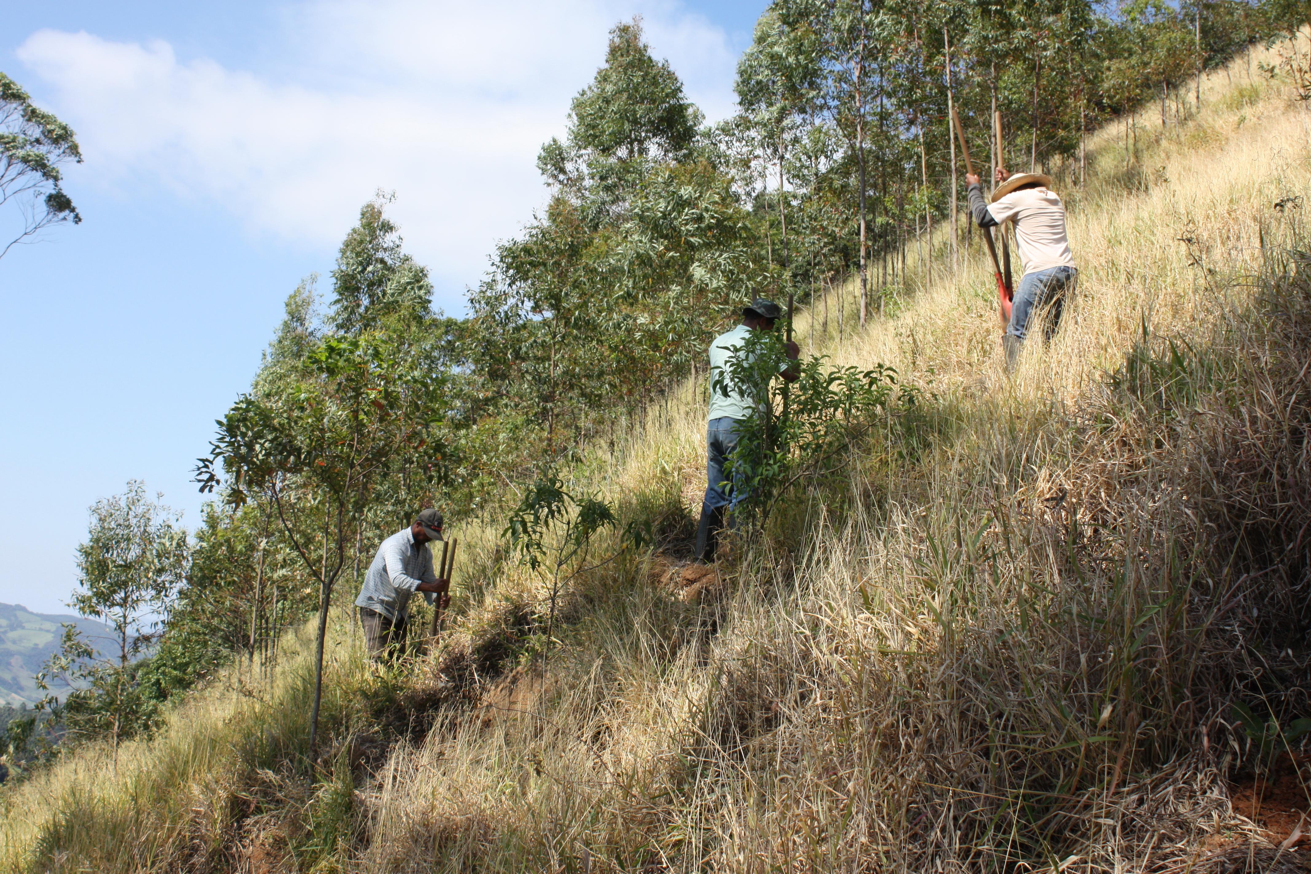Restauração Ecológica no Sistema Cantareira _Foto:Lucas Pereira/ Iniciativa Verde